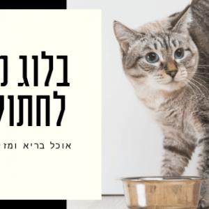 באנר לבלוג מזון לחתולים - BIZZT